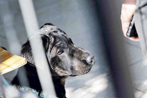Terrible: Perro fue quemado con agua hirviendo