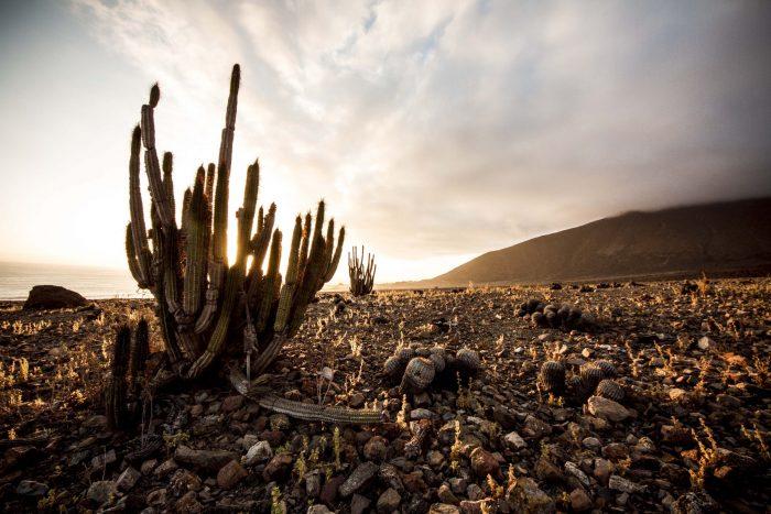 Sernatur Antofagasta busca fortalecer la innovación en la gestión del turismo municipal a través de concurso