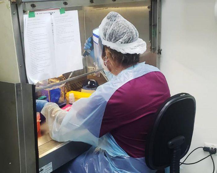 Laboratorio de Virología Molecular de la U. de Antofagasta completa más de 24 mil diagnósticos