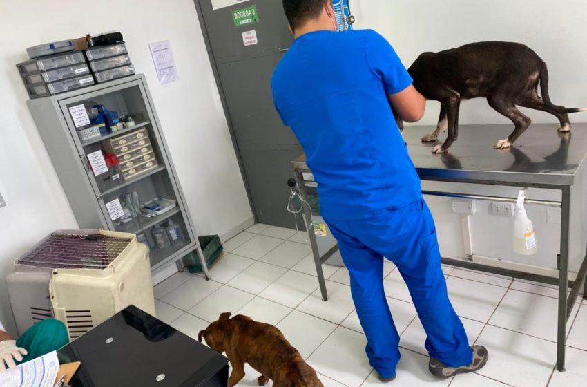 Detienen a sujeto por maltrato animal en Antofagasta