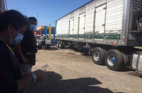 Antofagasta: Sernapesca y PDI desbaratan nueva red de comercialización ilegal de pulpo