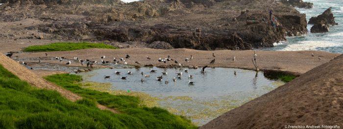 Región de Antofagasta tendrá su primer humedal urbano