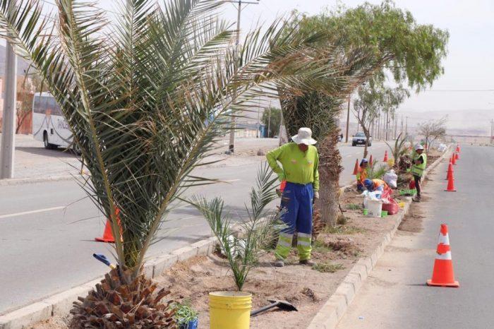Consiguen histórico subsidio de mantención de áreas verdes en Calama