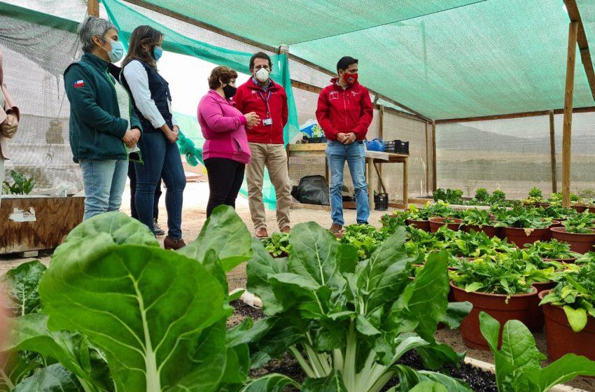 Agricultura regional: Intendente visita a productores de El Loa