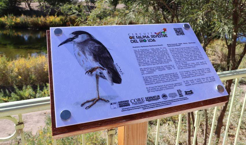 Inauguran un nuevo circuito educativo de la Fauna Silvestre del Río Loa