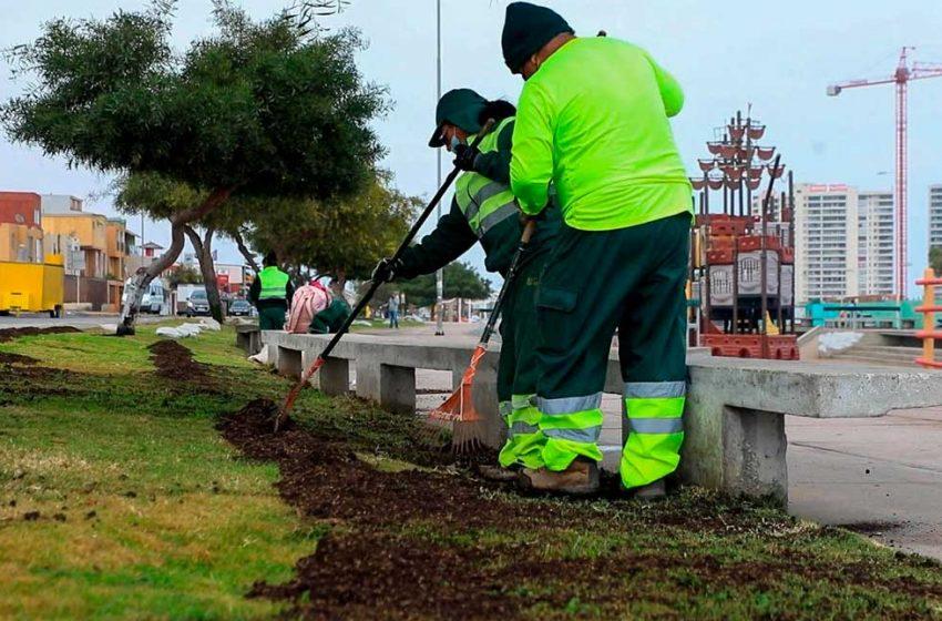 Municipalidad de Antofagasta comenzó un plan de fortalecimiento de áreas verdes
