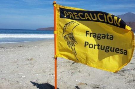 Fragata portuguesa son halladas en la costa de Tocopilla