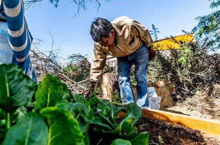 Huertos Familiares: más de 100 vecinos del Salar de Atacama cultivan sus propias hortalizas en el hogar